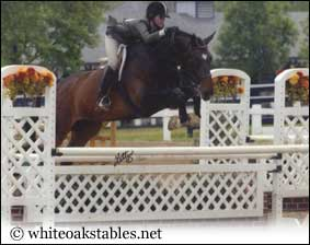 Texas and his owner jumping a 3ft jump